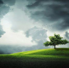 Planting Trees Correctly