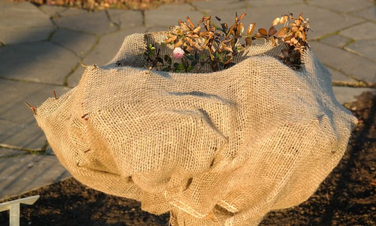 Winter protection for Trees and Shrubs