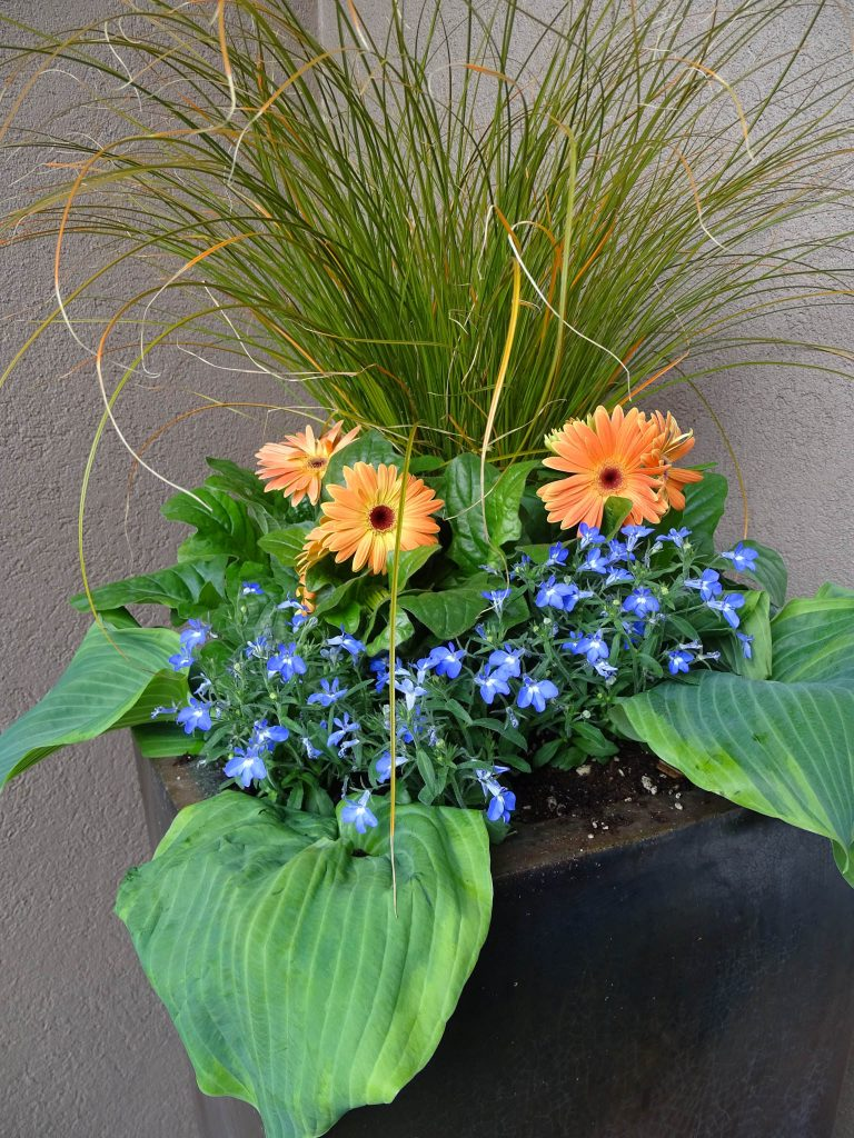 Simple Garden Container Planting