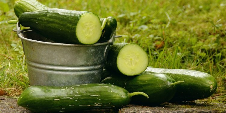 Cucumber and Squash Growing facts