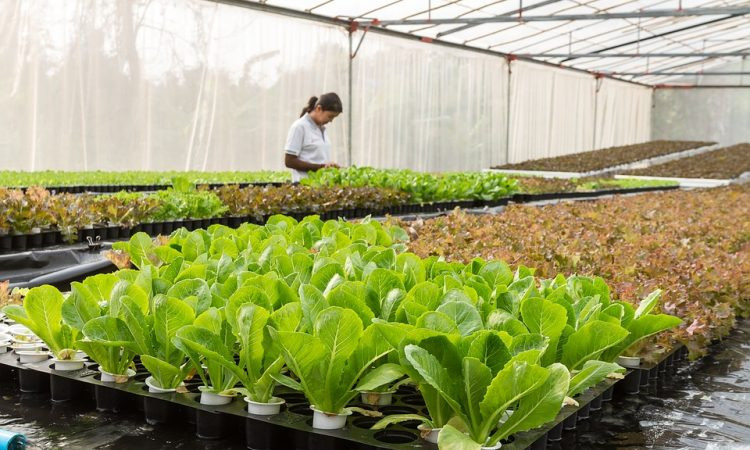 Growing tips for leafy green vegetables