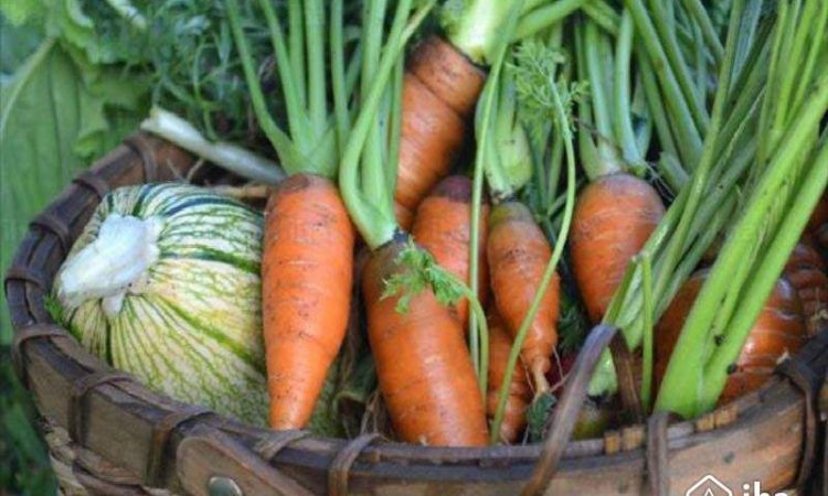 Harvesting Cool Season Vegetables