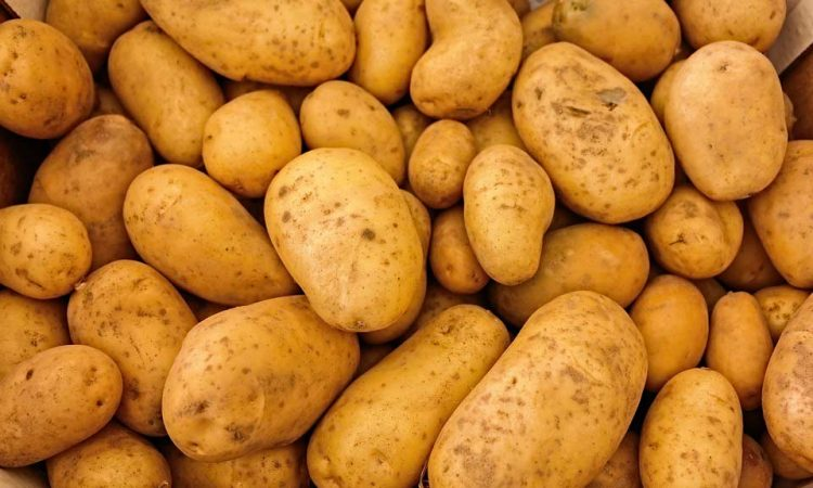 How to Grow Potato: Most useful of vegetables