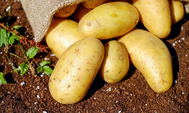 How to plant and grow a potato