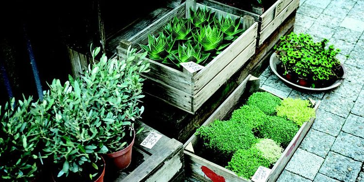 Problems with Pot Plants