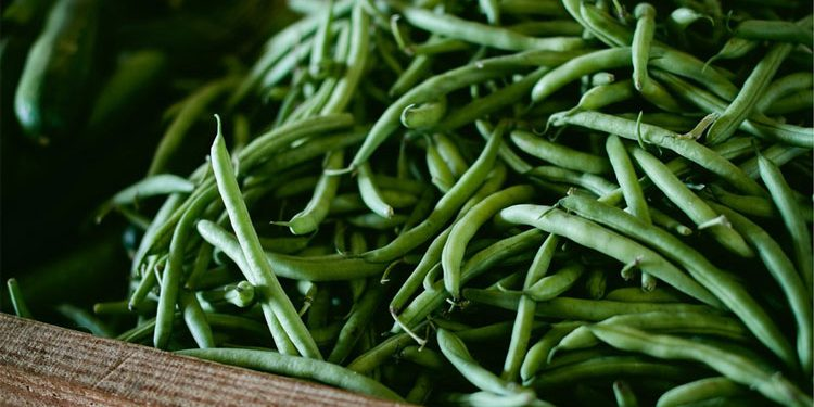 Beans How to grow and care for this vegetable