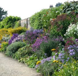 Designing a Herbaceous border