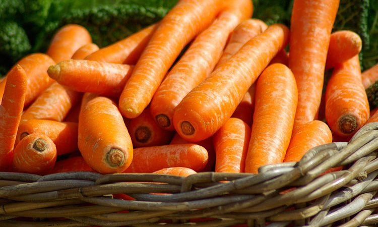 Growing carrots and parnips root crops