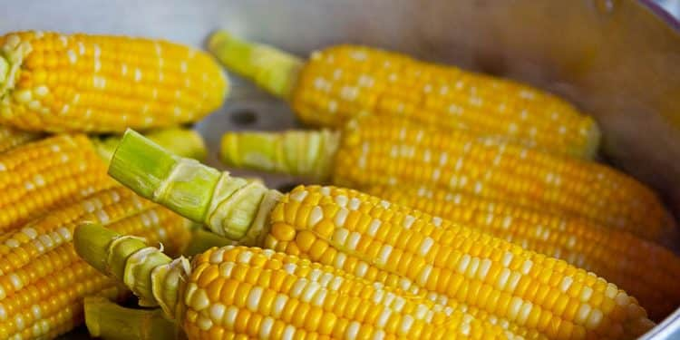 Growing corn and sweet corn what are the facts