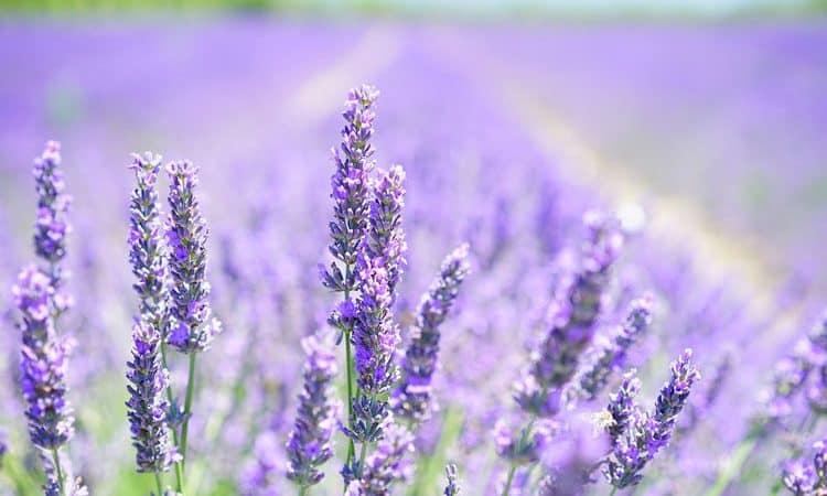 Herb Gardening - Harvest, Design, Storing Herbs