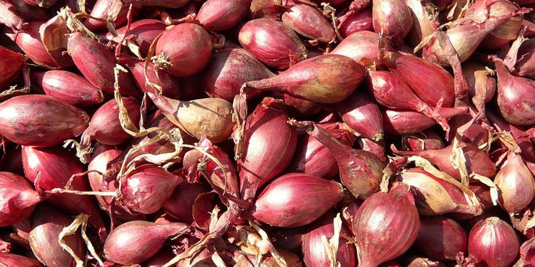 how to grow shallots