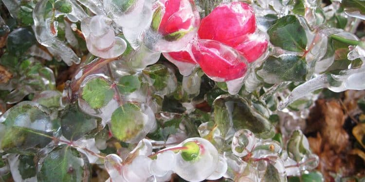 PROTECTING PLANTS FROM WINTER DAMAGE