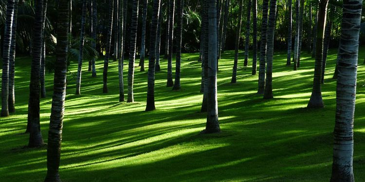 Shade Trees How to Select and Care for Them