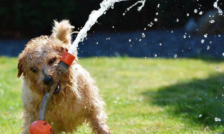 Garden watering: when how much