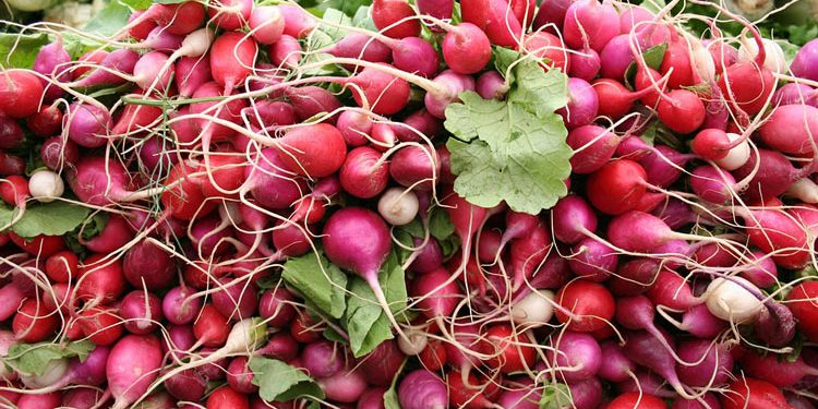 How to grow Radish from seed