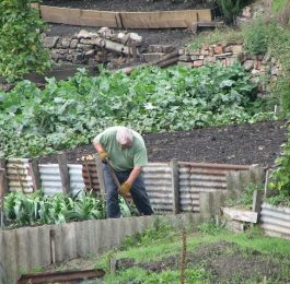 Planting the vegetable seed