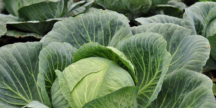 Salad Recipe - Let's Plant!