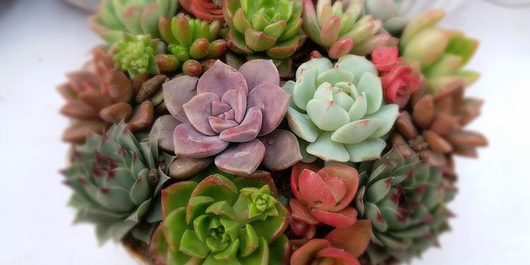 Succulent plants come in many shapes and sizes