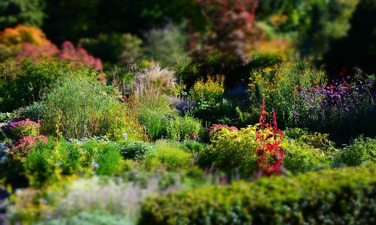 What to know - Planting a Perennial flower garden