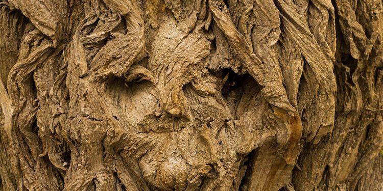 Winter Ornamentals - Bark