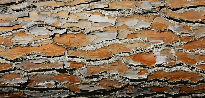 Attractive Bark - Winter Landscapes