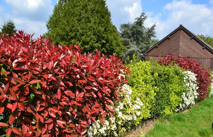 Plant a garden hedge