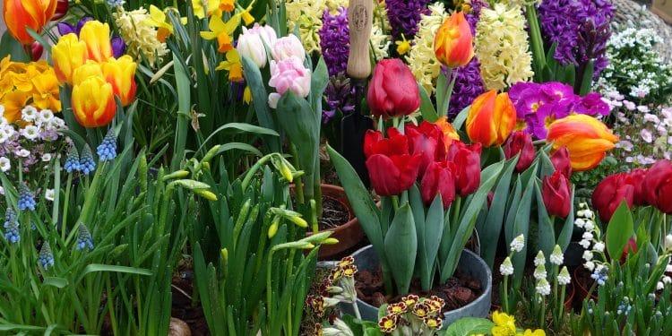 Planning your bulb garden