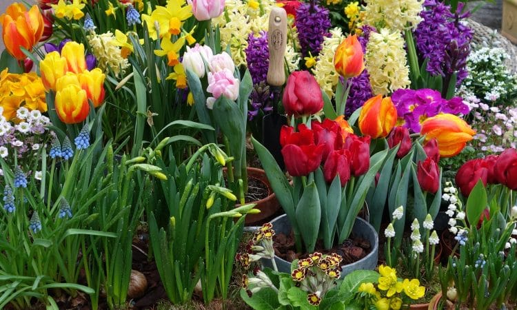 Planning your bulb garden