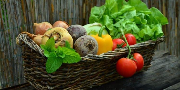 Early Summer tips for the vegetable garden
