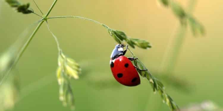 Common Beneficial Insects