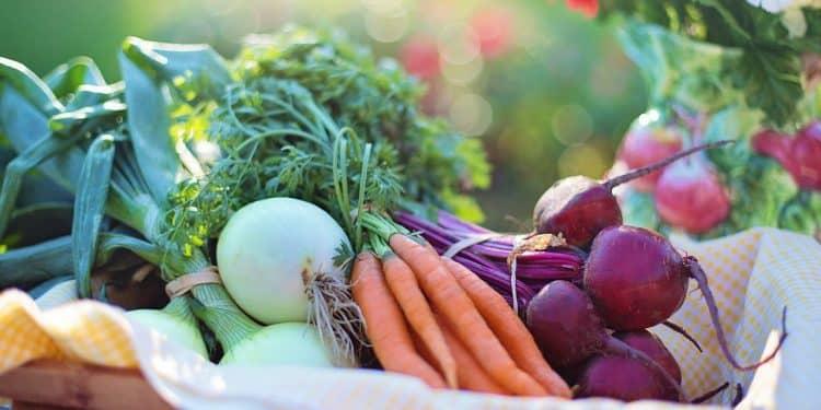 Harvesting Summer Vegetables