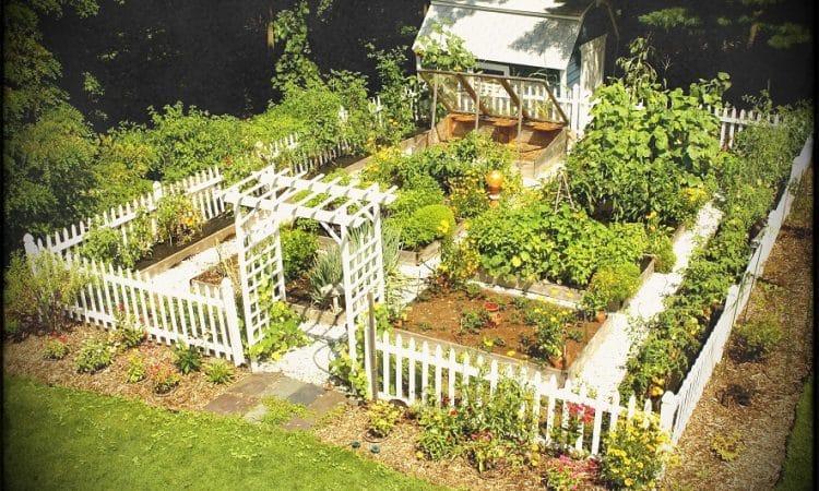 Organize Your Garden to Start a Vegetable Garden