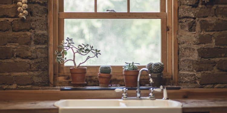 4 things you didn't know were killing your houseplants