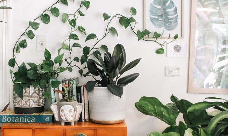 Benefits of using plants indoors