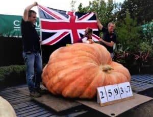 2594-lbs-big-pumpkin