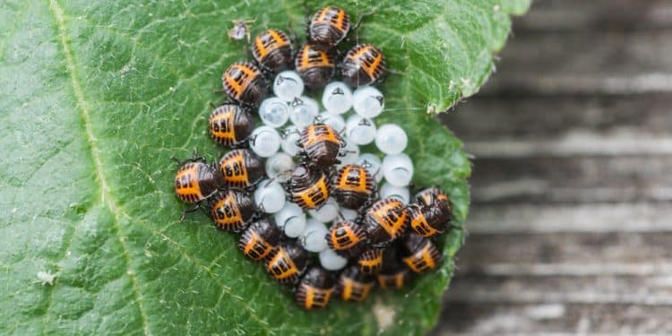 The 7 Most Common Insect Pests You'll Find in Your Garden