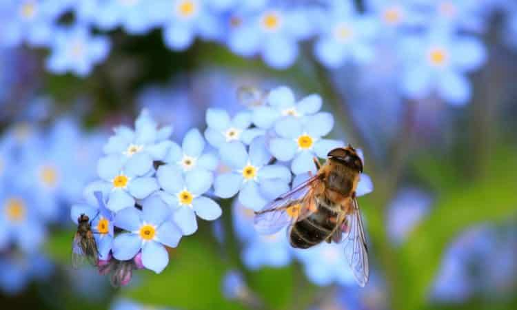 Bee-Friendly Plants for Your Landscaping