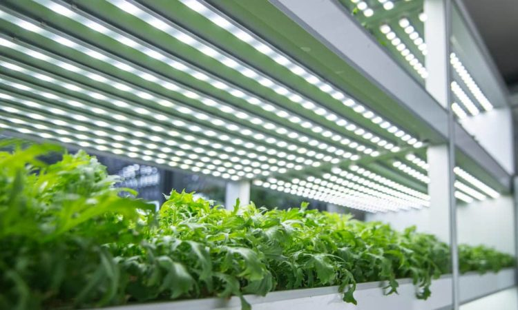 Can plants grow in artificial light?
