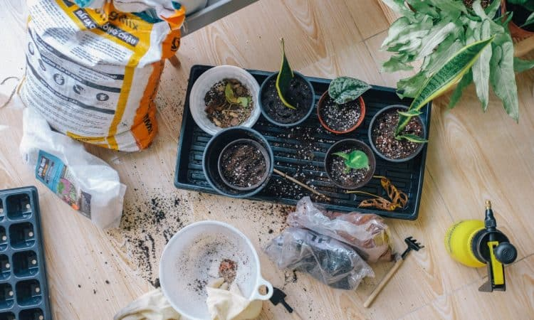 7 Tips To Get Your Garden Ready For Winter