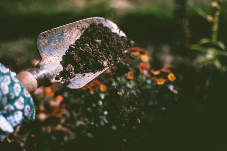 soil, potting, planting
