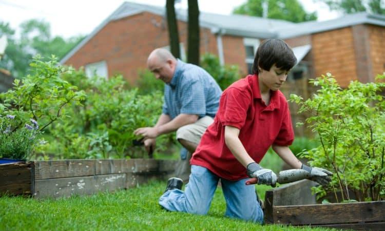 Melbourne Gardening Tips For Beginners