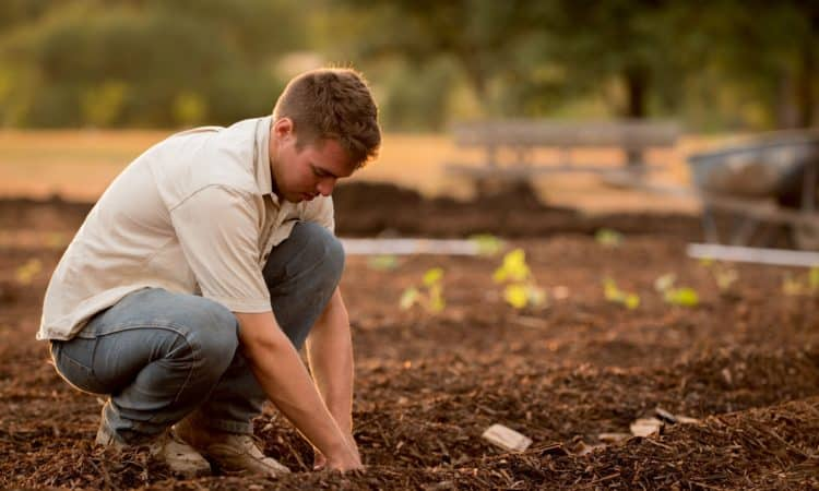 Why should you choose gardening as a hobby?
