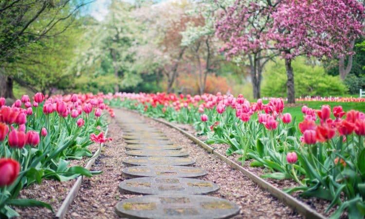 Essential Tips for Proper and Safe Landscaping