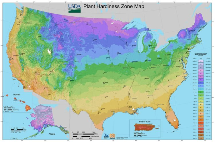 A Guide to America's Hardiness Zones