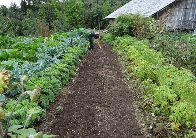 Planning for a Large Vegetable Garden: Tips and Tricks