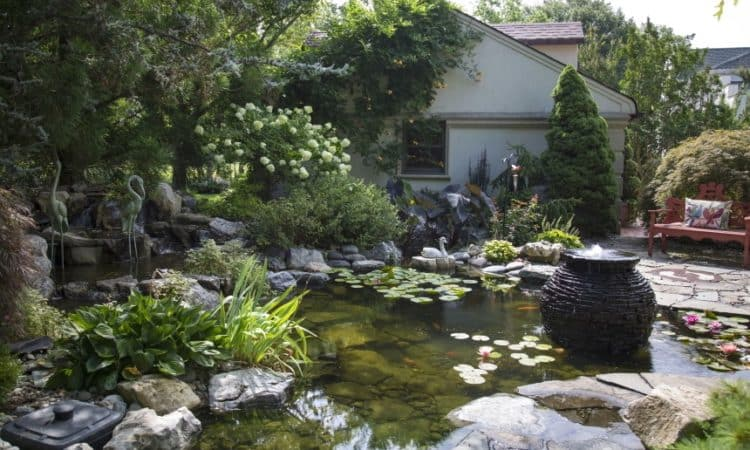 How to Build a Koi Pond in Your Backyard