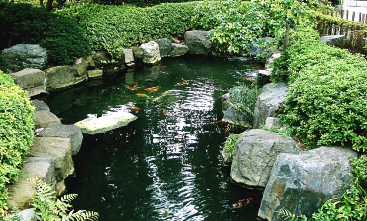 How to build a Koi pond and using the correct water filter