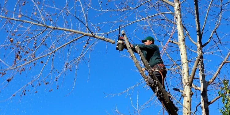 How To Maintain The Trees In Your Backyard