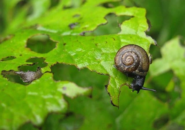 9 Easy Solutions to Garden Pests