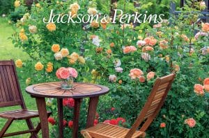 Jackson Perkins Catalog